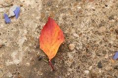 Jaskrawi piękni jesień liście na betonowym tle Zdjęcie Stock