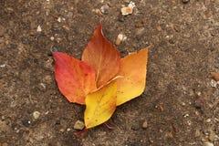 Jaskrawi piękni jesień liście na betonowym tle Obraz Royalty Free