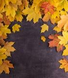 Jaskrawi piękni jesień liście na ciemnym tle Odgórny widok obrazy stock