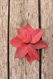 Jaskrawi piękni jesień liście na drewnianym tle Obrazy Stock