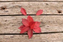 Jaskrawi piękni jesień liście na drewnianym tle Obraz Royalty Free