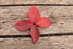 Jaskrawi piękni jesień liście na drewnianym tle Zdjęcie Stock