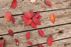 Jaskrawi piękni jesień liście na drewnianym tle Obrazy Royalty Free