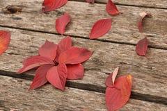 Jaskrawi piękni jesień liście na drewnianym tle Zdjęcie Royalty Free