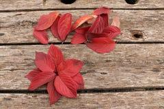 Jaskrawi piękni jesień liście na drewnianym tle Fotografia Royalty Free