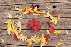 Jaskrawi piękni jesień liście na drewnianym tle Zdjęcia Stock