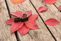 Jaskrawi piękni jesień liście na drewnianym tle Fotografia Stock