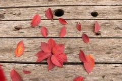 Jaskrawi piękni jesień liście na drewnianym tle Zdjęcia Royalty Free
