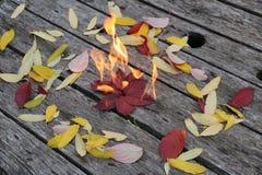 Jaskrawi piękni jesień liście palą na drewnianym tle Zdjęcia Stock