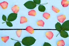 Jaskrawi różani płatki Zdjęcia Royalty Free