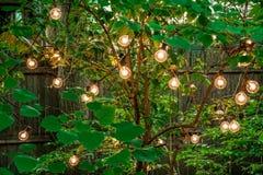 Jaskrawi Round Lightbulbs wiesza w zielonym drzewie Fotografia Royalty Free