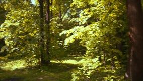 Jaskrawi słońce promienie iluminują wysokich drzewa zbiory wideo