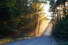 Jaskrawi sunbeams w lesie Zdjęcia Royalty Free