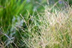 Jaskrawi traw pola z zamazanym tłem zdjęcia stock