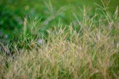 Jaskrawi traw pola z zamazanym tłem obrazy stock