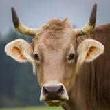 Jaskrawi ucho Fotografia Stock