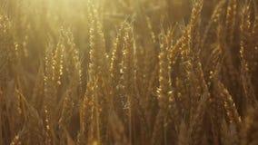 Jaskrawy światło słoneczne i, urocza natura w zwolnionym tempie, stabilizatorów strzały zdjęcie wideo