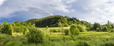 Jaskrawy światło słoneczne na Eifel łące z lasem Zdjęcie Stock