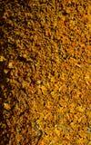 Jaskrawy Żółty Mały liszaj Makro- fotografia stock