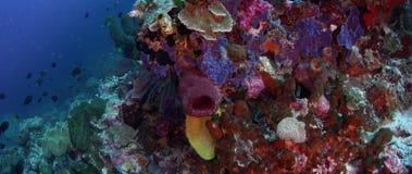 Jaskrawy barwiąca rafa koralowa z gąbkami, ciężkimi koralami i miękkimi koralami, zbiory wideo