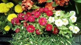 Jaskrawy barwiony kwiatu bukiet Zdjęcia Royalty Free