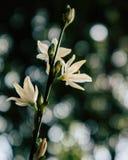Jaskrawy biały lato kwitnie z jaskrawym tłem zdjęcie royalty free