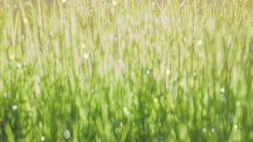 Jaskrawy bokeh gulgocze tło zbiory