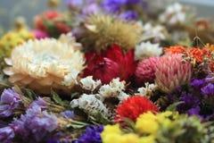 jaskrawy bukietów kwiaty Kwiecisty prezent Kwitnie dekorację Różny kwiatu tło Kolorowe naturalne rośliny Zdjęcia Stock