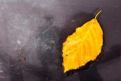 Jaskrawy colourful jesień liść unosi się w wodzie Fotografia Royalty Free