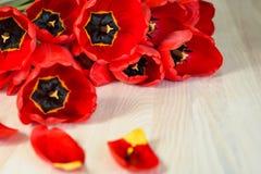 Jaskrawy czerwony tutpany fotografia royalty free