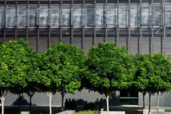 jaskrawy cztery zielonego drzewa Zdjęcia Stock