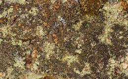 Jaskrawy i ciemny liszaj Obraz Stock