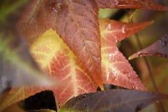 jaskrawy jesień liść Obraz Stock