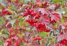 jaskrawy jesień tło Obraz Royalty Free