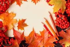 Jaskrawy jesień tekst i liście; rodzajowy spadku tło, doskonalić dla sprzedaż sztandarów lub save daktylowego szablon, ślubny zap Obraz Royalty Free