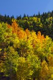 Jaskrawy jesień kolor Fotografia Royalty Free