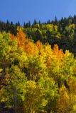 Jaskrawy jesień kolor Zdjęcia Royalty Free