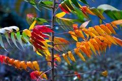 Jaskrawy jesieni ulistnienie. Zdjęcie Royalty Free