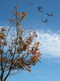 Jaskrawy jesieni ulistnienie z grupą ptaki Zdjęcia Royalty Free