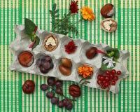 Jaskrawy jesieni wciąż życie w kartonie jajka Zdjęcie Stock