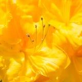 Jaskrawy kolor żółty Fotografia Stock