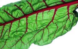 Jaskrawy kolorowy czerwony szwajcarski chard, zdrowa świeża żywność obrazy stock