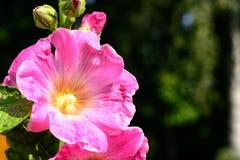 Jaskrawy kolorowy kwiat wiosny abstrakta tło Obraz Stock