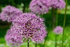 Jaskrawy kolorowy kwiat wiosny abstrakta tło Zdjęcie Royalty Free
