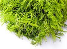 jaskrawy koperkowa świeża zieleń Fotografia Royalty Free