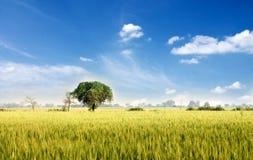Jaskrawy krajobraz Obrazy Royalty Free