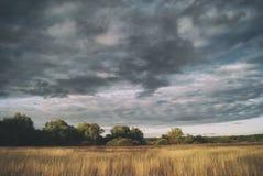 Jaskrawy krajobraz lasy pod chmurnym niebem i pola Zdjęcia Royalty Free