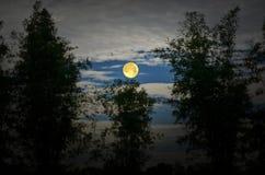 Jaskrawy księżyc w pełni i bambusa las w wieczór Zdjęcie Stock