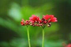 Jaskrawy kwiat Fotografia Stock