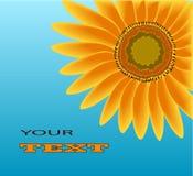 Jaskrawy kwiat słonecznik na błękitnym tle Zdjęcia Royalty Free